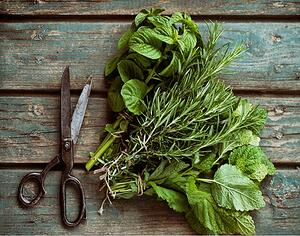 Why-You-Should-Start_Your-Own-CT-Herb-Garden.jpg